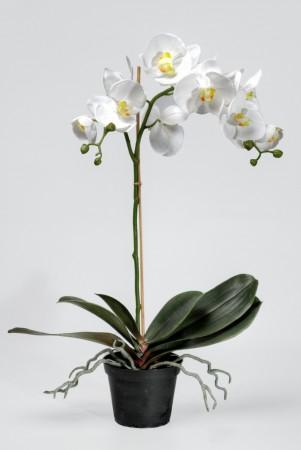 Phalaenopsis 60cm Hvit